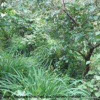 In den frühen 1990er Jahren plante Hermann Gruber seinen Waldgarten